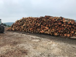 Durham-logs-9